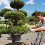 Okrasný strom může ozdobit vstup do vaší firmy nebo obchodního domu
